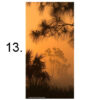 FR060018-Big Cypress N.P. South Florida, USA